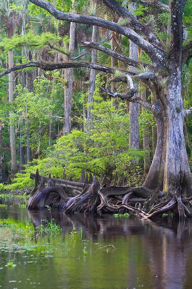 Creepy Tree by Karen  Moore