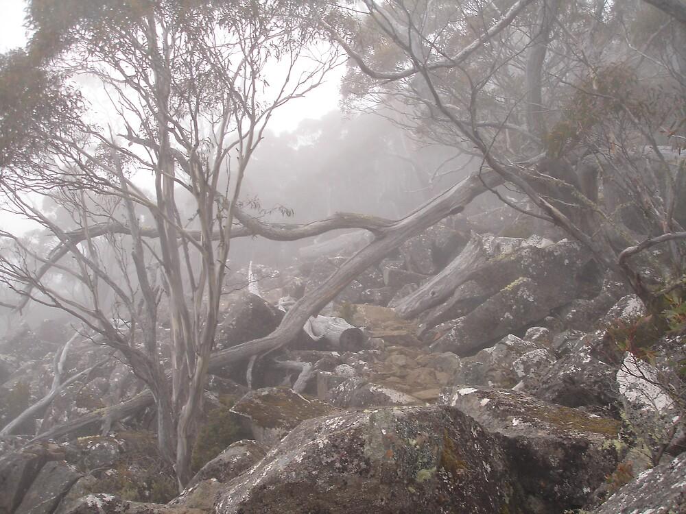 Mt Wellington Fog by Marc Bester