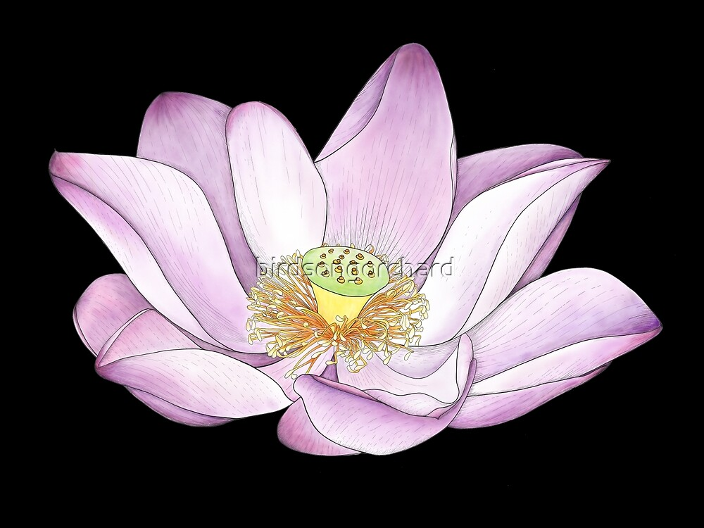 For the lotus eaters by birdsongorchard redbubble for the lotus eaters by birdsongorchard mightylinksfo