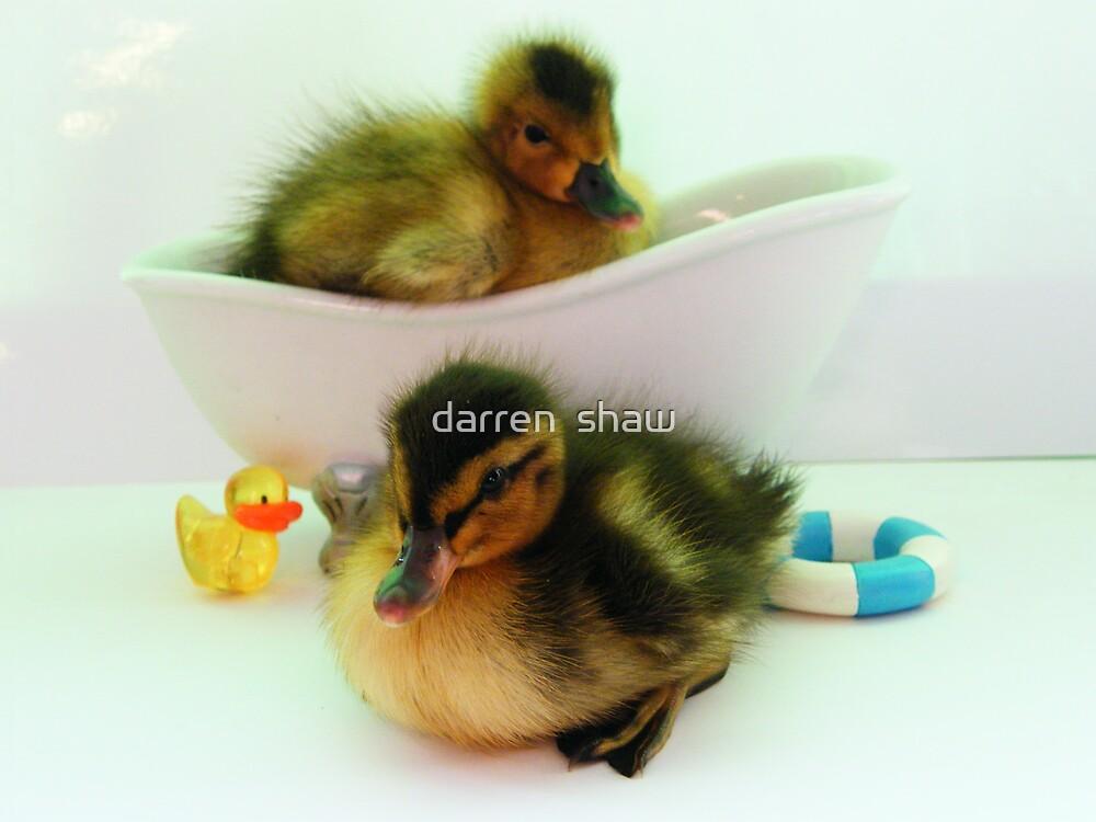 ducklings bath time  by darren  shaw