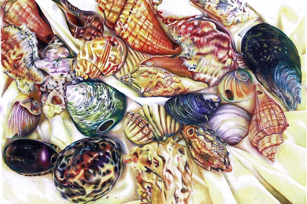 A collection of shells by Skye  Riseley