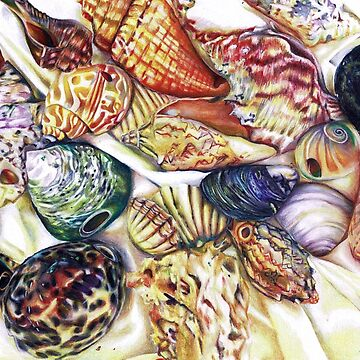A collection of shells by SkyeRiseley