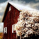 bloomin' barn by Andrew Hoisington