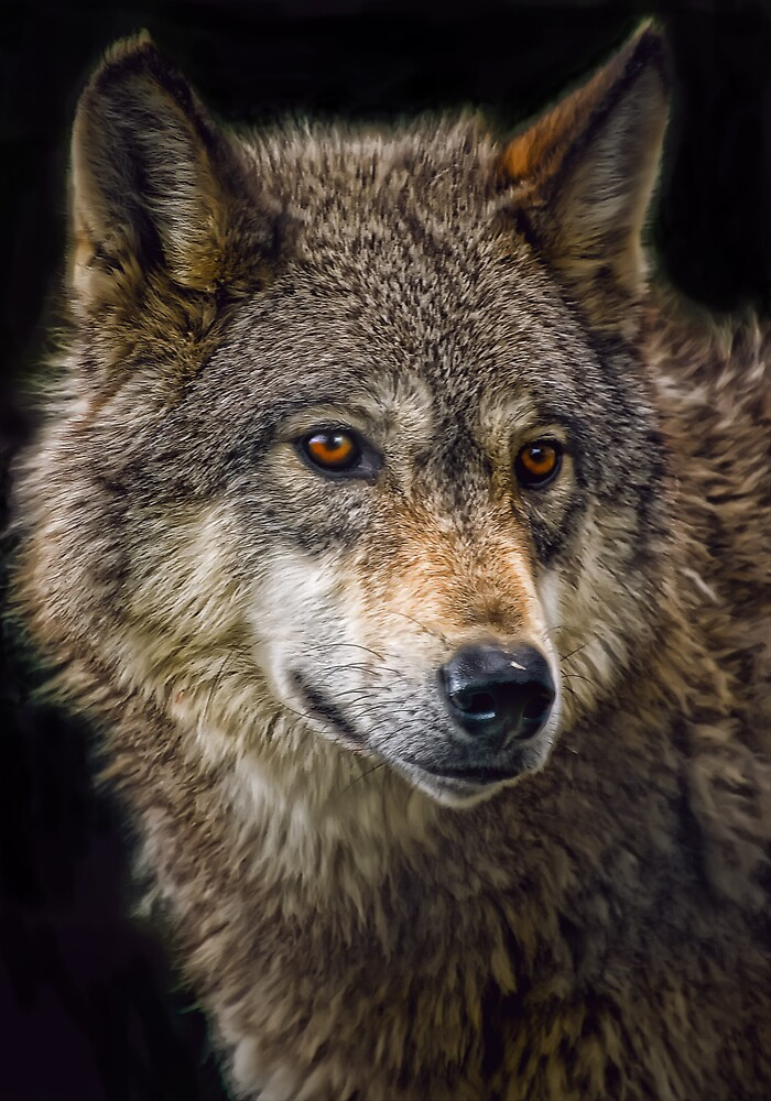Wolf by Cheri  McEachin