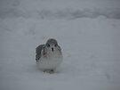 Cold Bird by LudaNayvelt