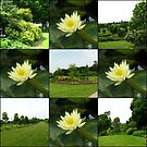 Hyde Hall Collage with Water Lilies by MidnightMelody