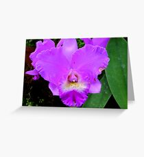 Lavender Orchid (cattleya) Greeting Card