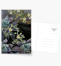 Twinkle, Twinkle, Succulent Stars Postcards