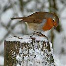 Robin by Yampimon