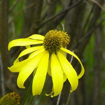 Yellow Flower  by auntslappy282