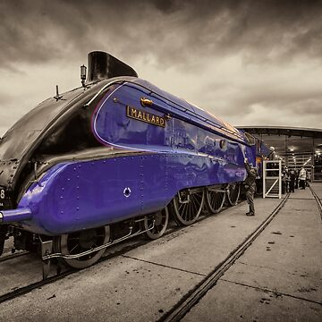 Mallard at Shildon  by hawkie