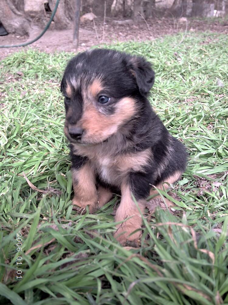 Little Cute Puppy hehe by Laydee-Tequila