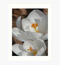 ~White Spring~ Art Print