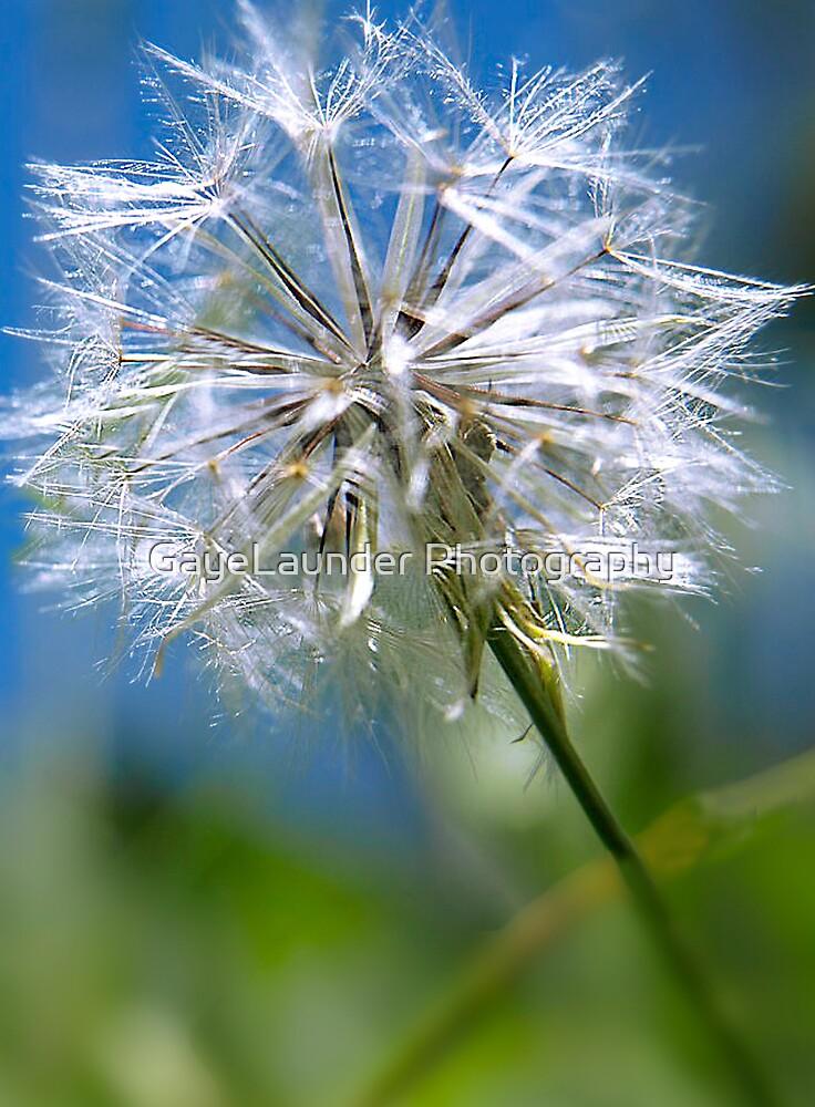 Make a wish by GayeLaunder Photography