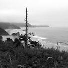 The Oregon Coast by Shaina Haynes