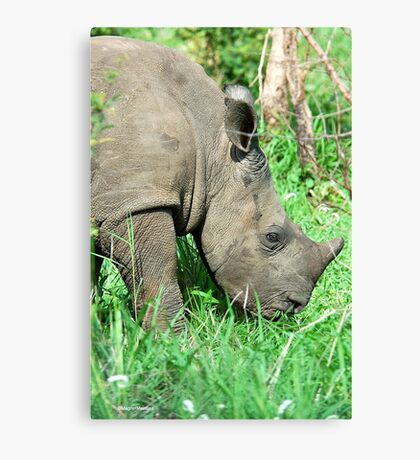 UP CLOSE THE BABY RHINO - White Rhinoceros - Ceratotherium simum  -  WIT RENOSTER Canvas Print