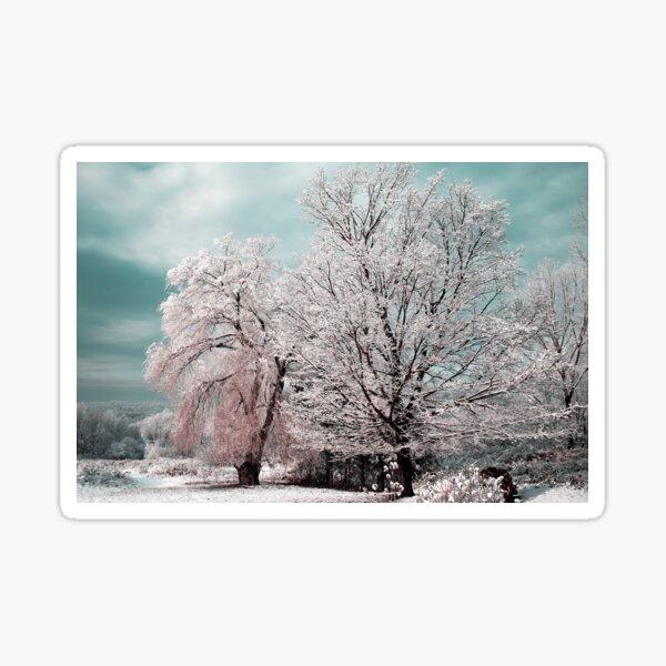 Redreaming Winter Trees  Sticker