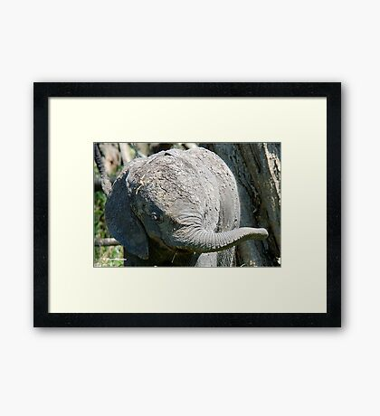 AFTER A MUD BATH, THE BABY ELEPHANT  - THE AFRICAN ELEPHANT – Loxodonta Africana Framed Print
