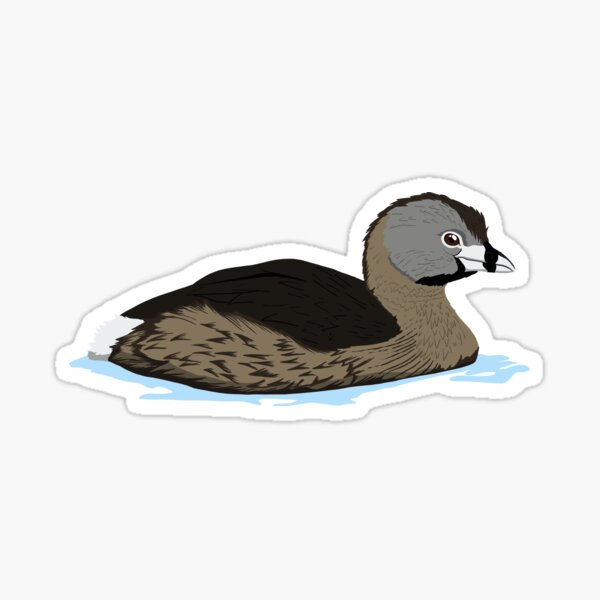 Pied-billed Grebe Sticker