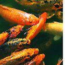 KOI FISH... by HanselASolera