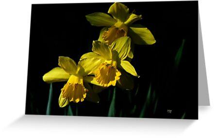 Golden Bells by Lois  Bryan