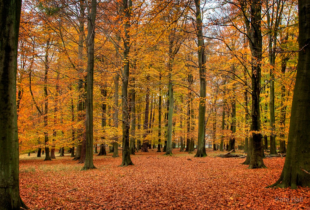 Fall in Dyrehaven, Denmark by Kate Hall