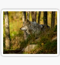 Timber Wolf In The Forest Sticker