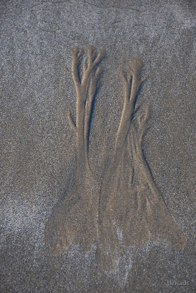 trees in the sand by linsads