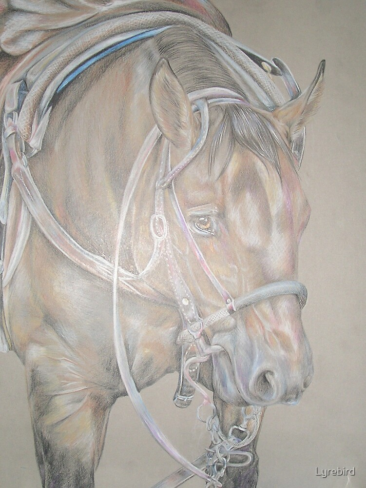 Quarter Horse by Lyrebird