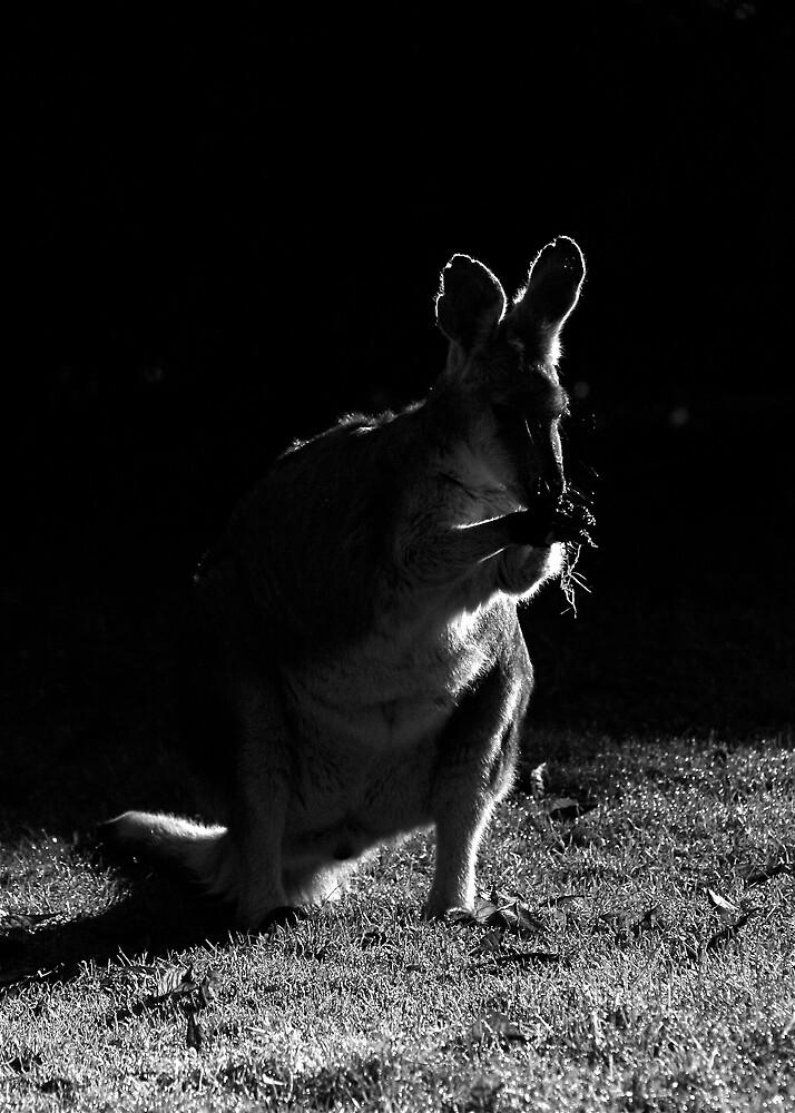 Roo by IanPharesPhoto