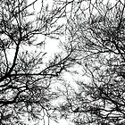 Tree Silhouette Series 7 by Karen Stahlros
