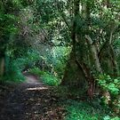 Shady Path by Ann Garrett