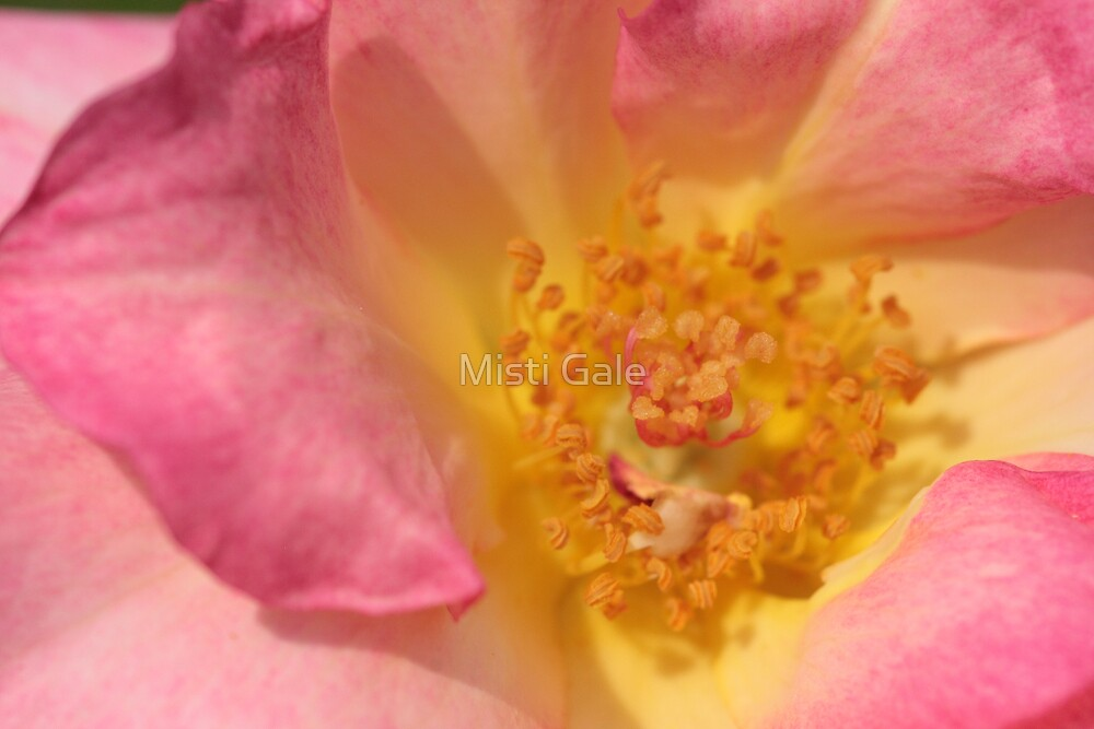 Macro Flower III by Misti Love