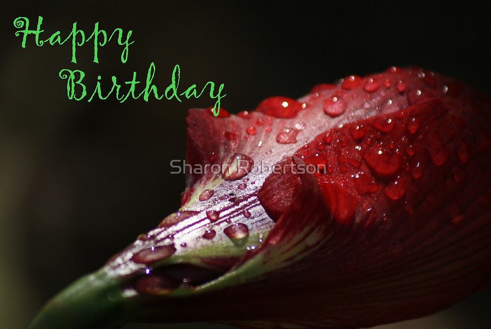 Happy Birthday Card by Sharon Robertson