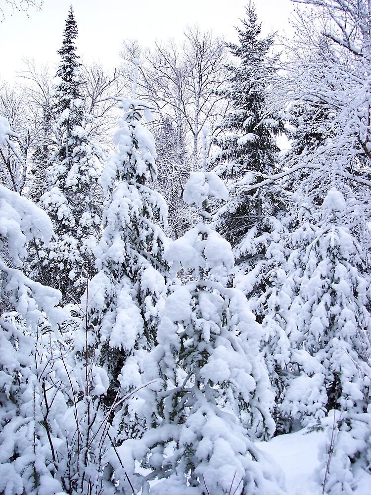 A White Forest  by Braedene