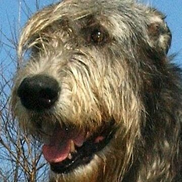 irish wolfhound by marasdaughter