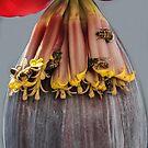 Banana Flower Bees by Heather Friedman
