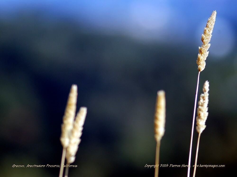 Grasses by Darren Hardy