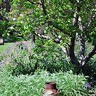 Garden View by Julie Sherlock