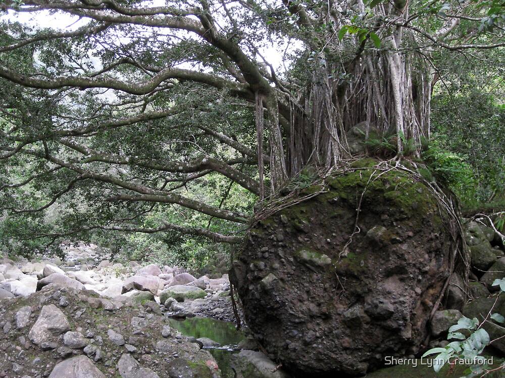 Banyan Tree by Sherry Lynn Crawford