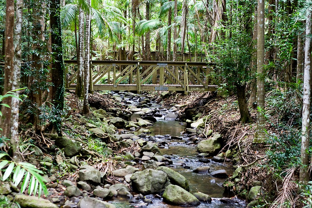 Buderim Forest Park by Martin Canning
