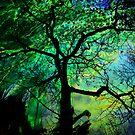 Vertigo by Pamela Bates