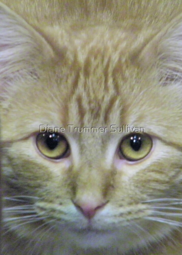 Colby ~ Dolby by Diane Trummer Sullivan