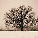 King Tree by velveteagle