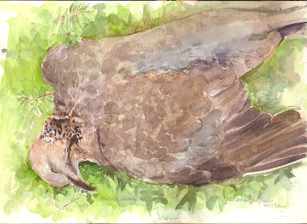 Spotted Dove by Tama Blough
