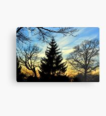 Silhouetted trees at sunset! Metal Print