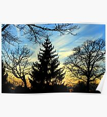 Silhouetted trees at sunset! Poster