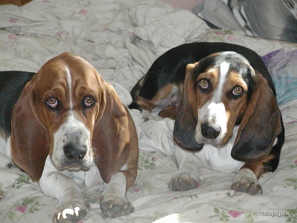 The Puppies Dec. 2008 by nosajnybor