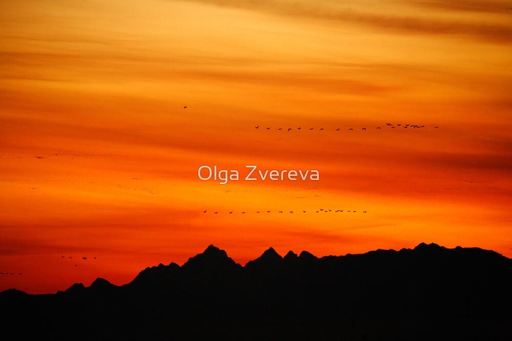 Fire in the Sky by Olga Zvereva