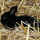 Black Bunny by AnnDixon